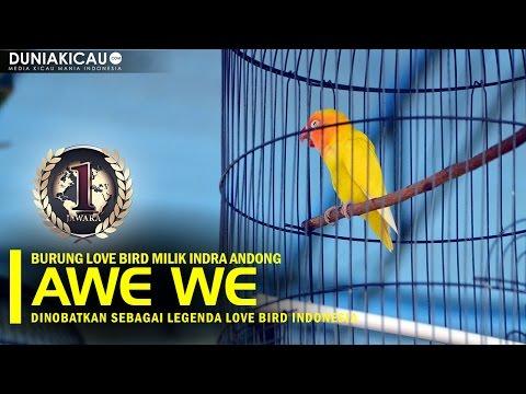 PIALA PASUNDAN - AWEWE Dinobatkan Sebagai Legenda Love Bird Indonesia