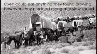 Covered Wagons Of The Oregon Trail