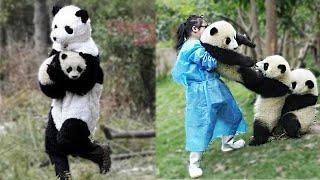 7 Secretos oscuros de Pandas que China no quiere que sepas