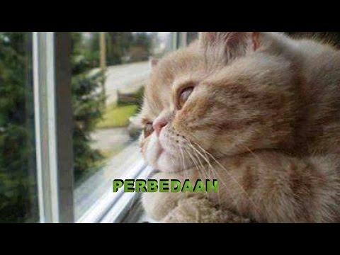PERBEDAAN---(REMIX HOUSE)