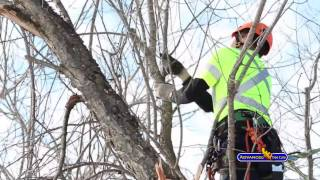 Advanced Tree Care - Our Services: Tree Pruning