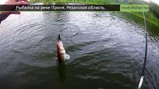 Рыбалка на р. Проня Рязанской области. Судак, подлещик и куча мелочи