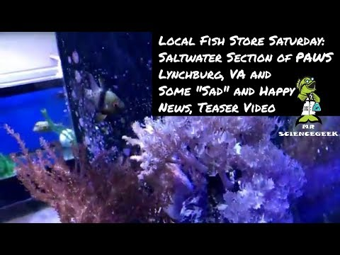 Local Fish Store Saturday: The Saltwater Section of Pets and Aquatics Warehouse, and Sad/Happy News