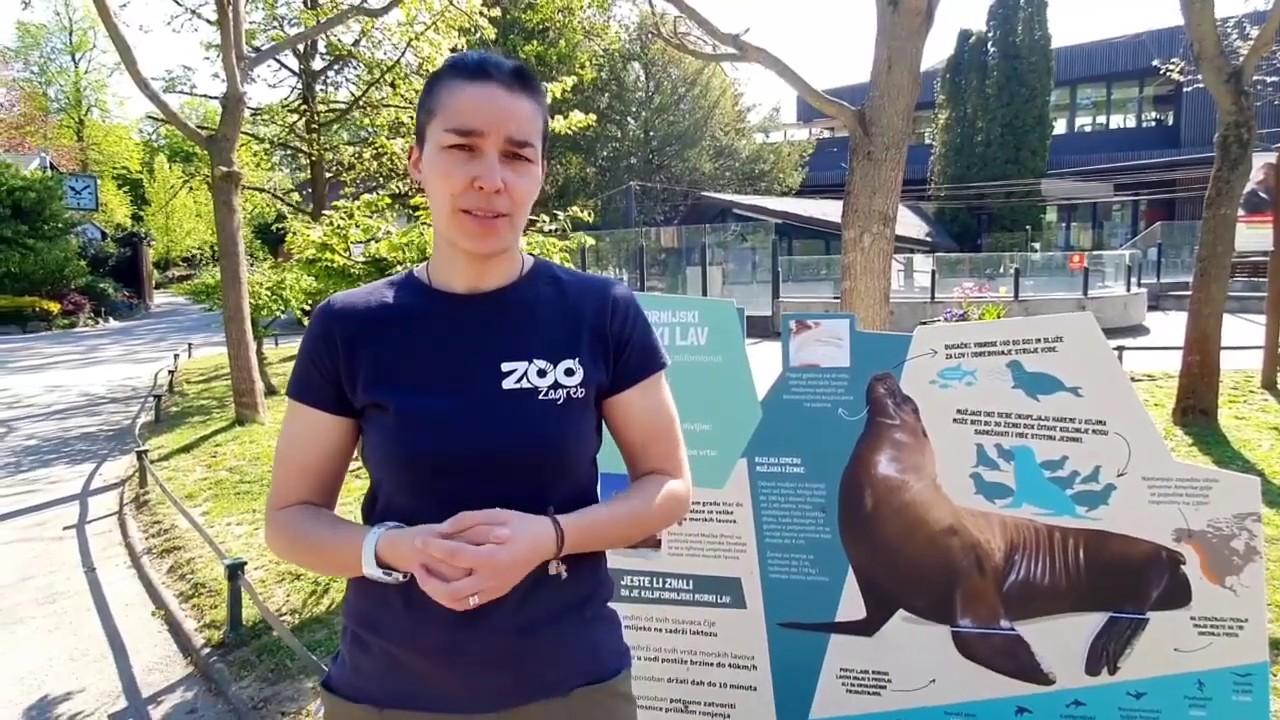 Edukativna Prica Kalifornijski Morski Lav Zoo Zagreb