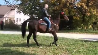 Hubertus Racibórz - Ostróg 04.10.2014 cz1