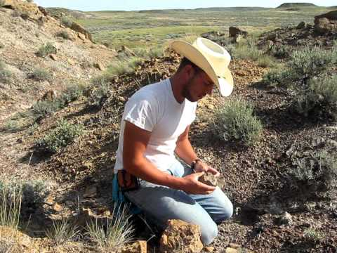 Finding Triceratops in the Hell Creek Formation