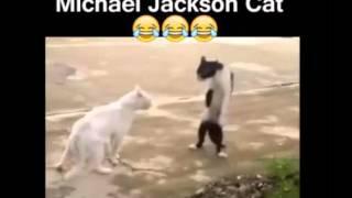 Michael Jackson Cat, Funny Cats, Funny Animals