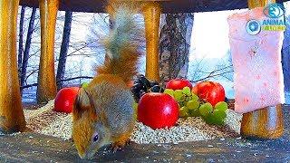 🐿️ Wiewiórka