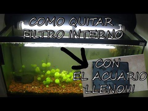 Como QUITAR FILTRO INTERNO ( Bio Box 2) con el acuario LLENO!!