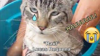 """""""¡raúl!""""   Lucas Requena - ¡gatos Cantando A Raúl!"""