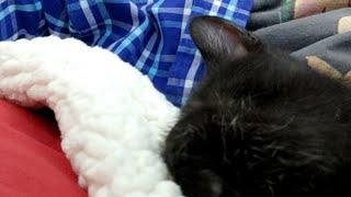 Kitten close up 2018-07-04 thumbnail