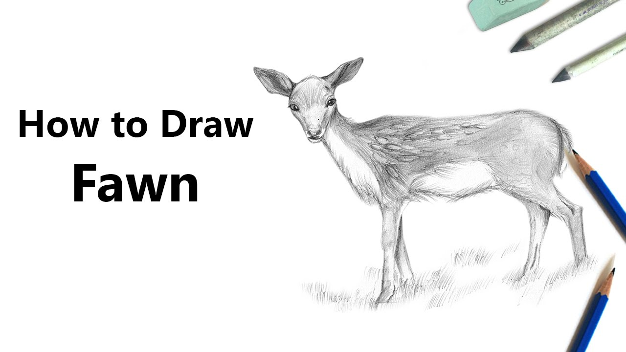 how to draw a baby deer aka fawn with pencils time lapse