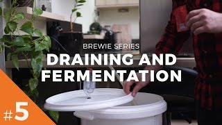 Brewie Series #5 - Draining and Fermentation