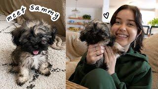 meet my new puppy sammy!