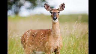 Wildtiere unserer Heimat   Tierdoku, Tierfilm, Dokumentarfilm, Doku, deutsch kostenlose Dokus