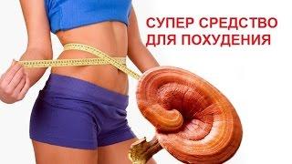 Ганодерма Для Похудения. Гриб Ганодерма(Ganoderma) цена, отзывы.