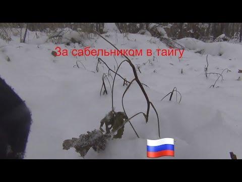 Сабельник болотный, корень - Все травы - Алтайский травник