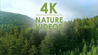 4k video ultra hd hdr | wald forest ...