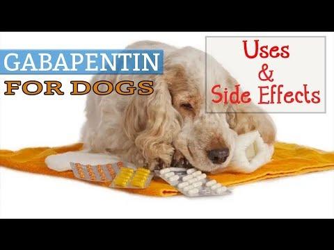 Learn About Gabapentin Dog Dosage