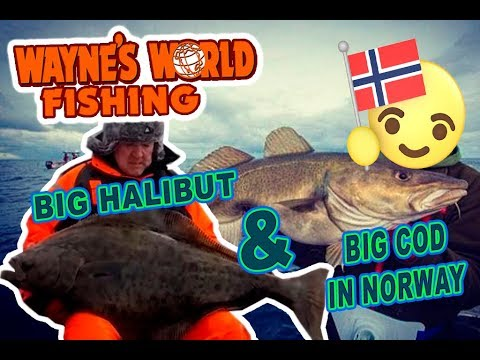 BIG COD AND HALIBUT FISHING IN NORWAY!