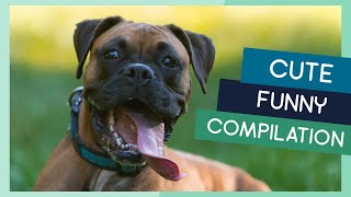 Boxer Compilation: Cute Puppies, Funny Dogs & Tricks