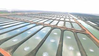 تفاصيل مشروع الاستزراع السمكي العملاق  بالإسماعيلية ومشروع كوبرى النصر الذى يربط بورسعيد وبورفؤاد