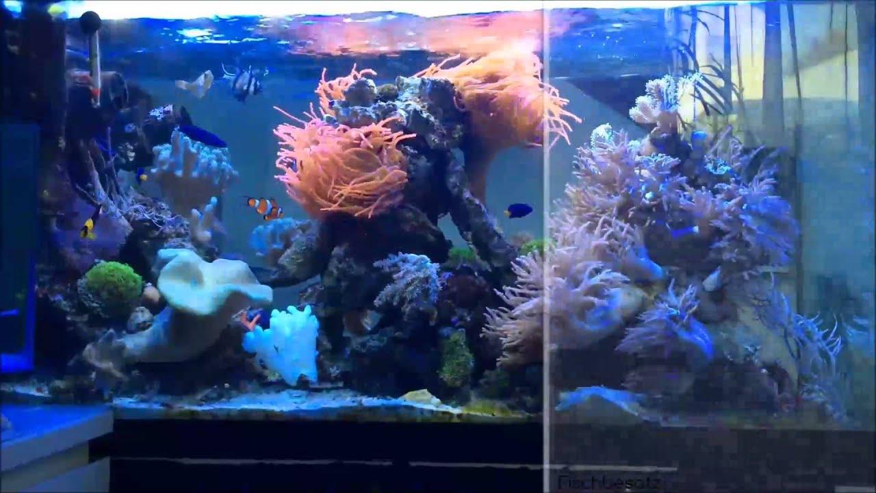 Unser erstes salzwasseraquarium teil 14 full hd youtube for Salzwasser aquarium