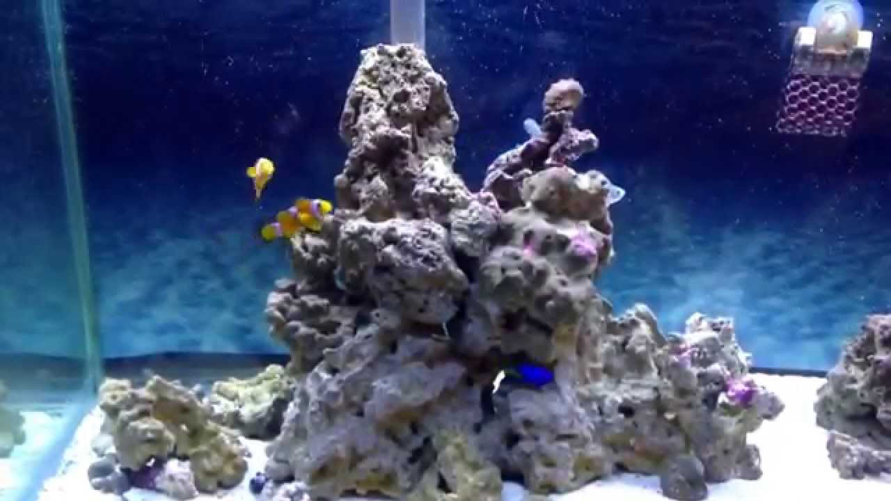 55 gallon saltwater marine aquarium with hang on back filters