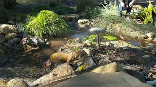 How to Install a Koi Pond Net to Keep Out Fall Leaves