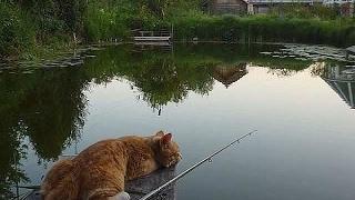 Кошки на рыбалке. Лучшая нарезка
