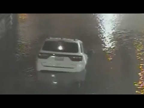 Video shows woman drowns in her car; zoo animals on the loose after flooding - Compilation