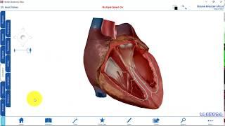 Human Anatomy Atlas   Phần mềm xem giải phẫu 3D (Bản rút gọn FREE)