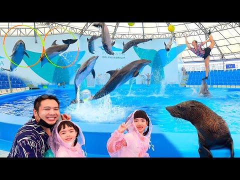 หนูยิ้มหนูแย้ม ดูโชว์โลมา Pattaya Dolphinarium