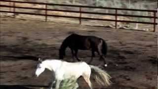 Temecula Homes for sale. Ranch Estates. Farms. Horse Property Orange County. San Diego