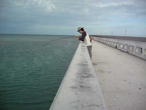 Tarpon fishing video off of 7 mile bridge in florida youtube for Out of state fishing license florida