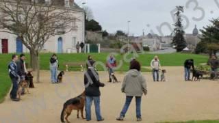 club deducation canine chateau gontier les cours