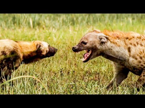 Top 5 Best Animal Mothers   BBC Earth