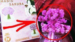 Волшебная сакура из Китая.Magic sakura.(Ссылка на товар:http://ali.pub/6t02m ♢♢♢♢♢♢♢♢♢♢♢♢♢♢♢♢♢ ✓Верни до 18% с любой покупки на Aliexpress:https://cashback.epn.bz/?in..., 2016-05-01T15:42:25.000Z)