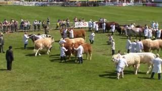 Pecampwriaeth y Fitzhugh | Fitzhugh Beef Cattle Champion