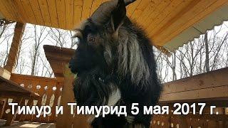 Тимур и Тимурид 5 мая 2017 г.