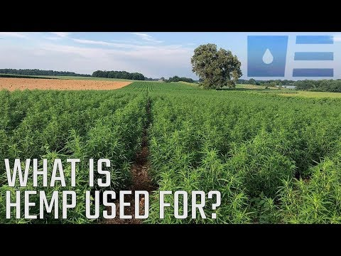 What is industrial hemp used for? | Extract Labs Farm Visit