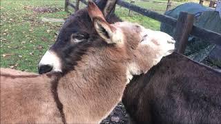 Birmingham Donkey Sanctuary 17/11/18