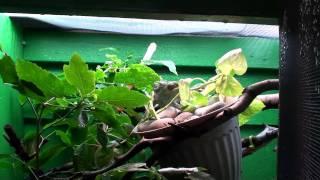 Double Chameleon Closet Cage
