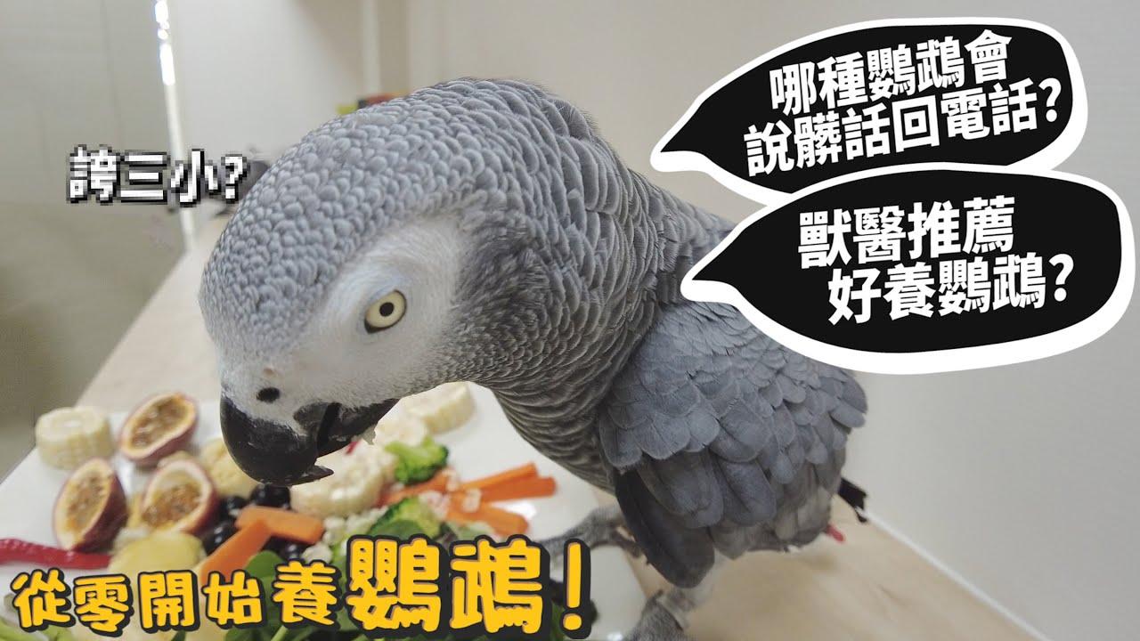 【從零開始養】鸚鵡!哪種鸚鵡會說髒話回電話?獸醫推薦好養鸚鵡?鸚鵡吃什麼?鸚鵡籠子推薦?【許伯簡芝】parrot