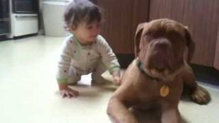 Baby And French Mastiff