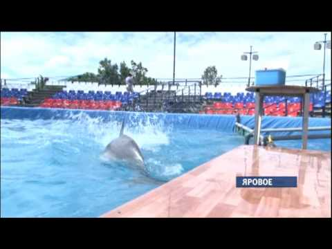 Третье лето подряд в Яровом работает московский дельфинарий