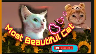 Relaxing Music || Cat Moment || Cute Cat || A time with my cat #Catlovers #cat #cute Mairine Gemora