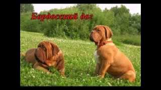 Породы собак Рабочие собаки