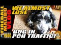 DOG almost gets HIT BY A CAR! - FMV426