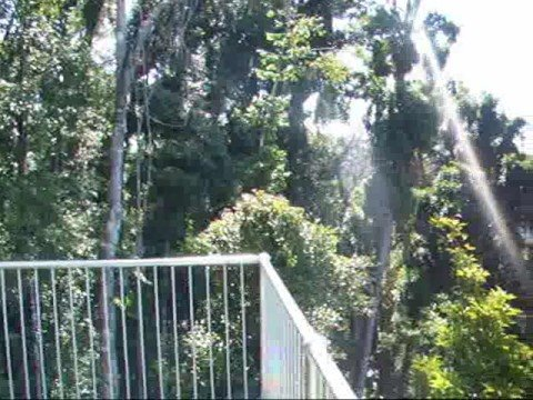 Mamu Rainforest Canopy Walkway Australia & Mamu Rainforest Canopy Walkway Australia - YouTube